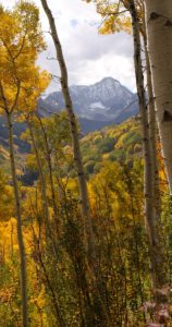 Capitol Peak among fall aspen trees